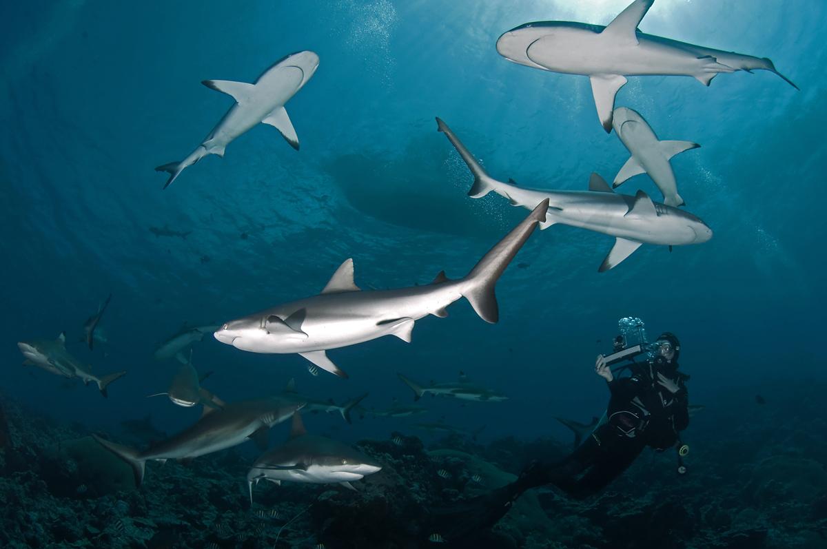 Sharkography