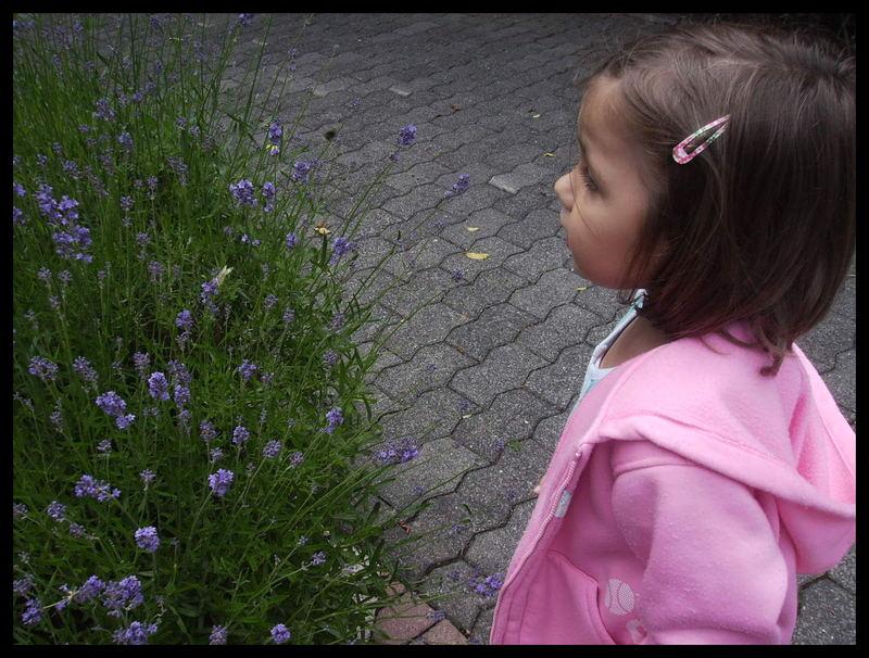 Sharleen & der Lavendel
