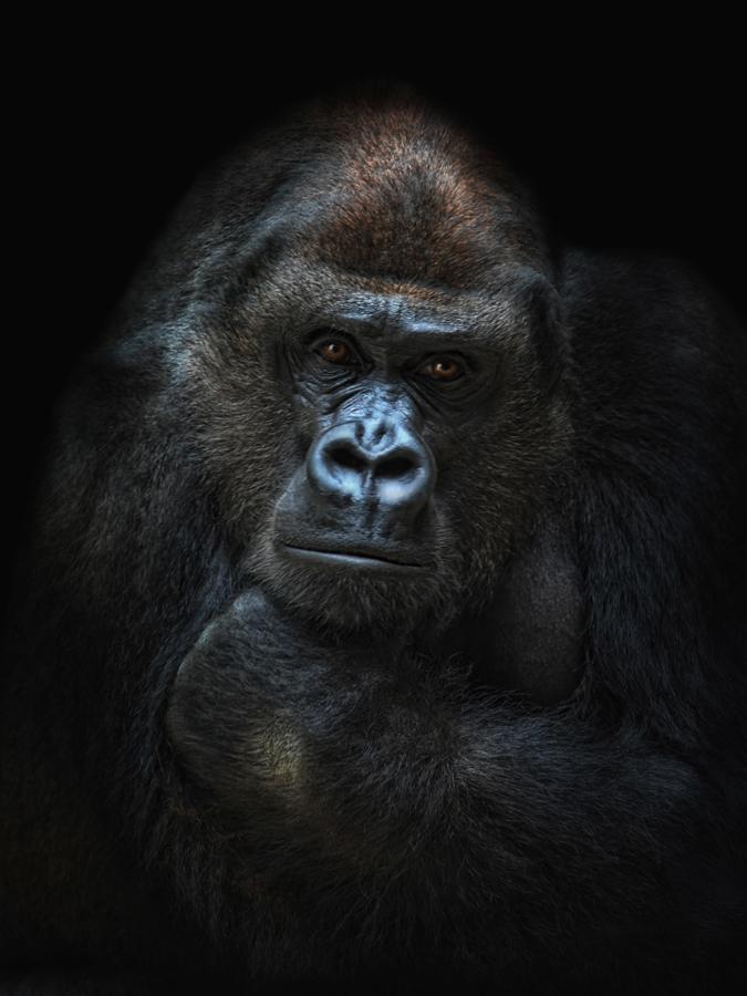 she-gorilla