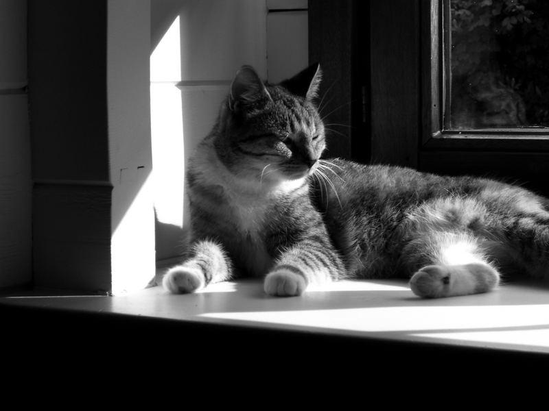 she likes the sun