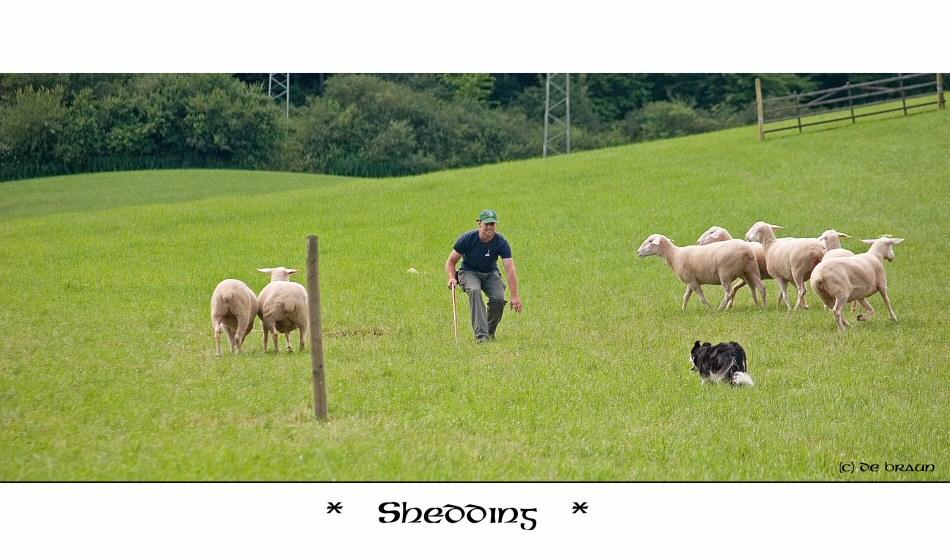~ sheeding ~