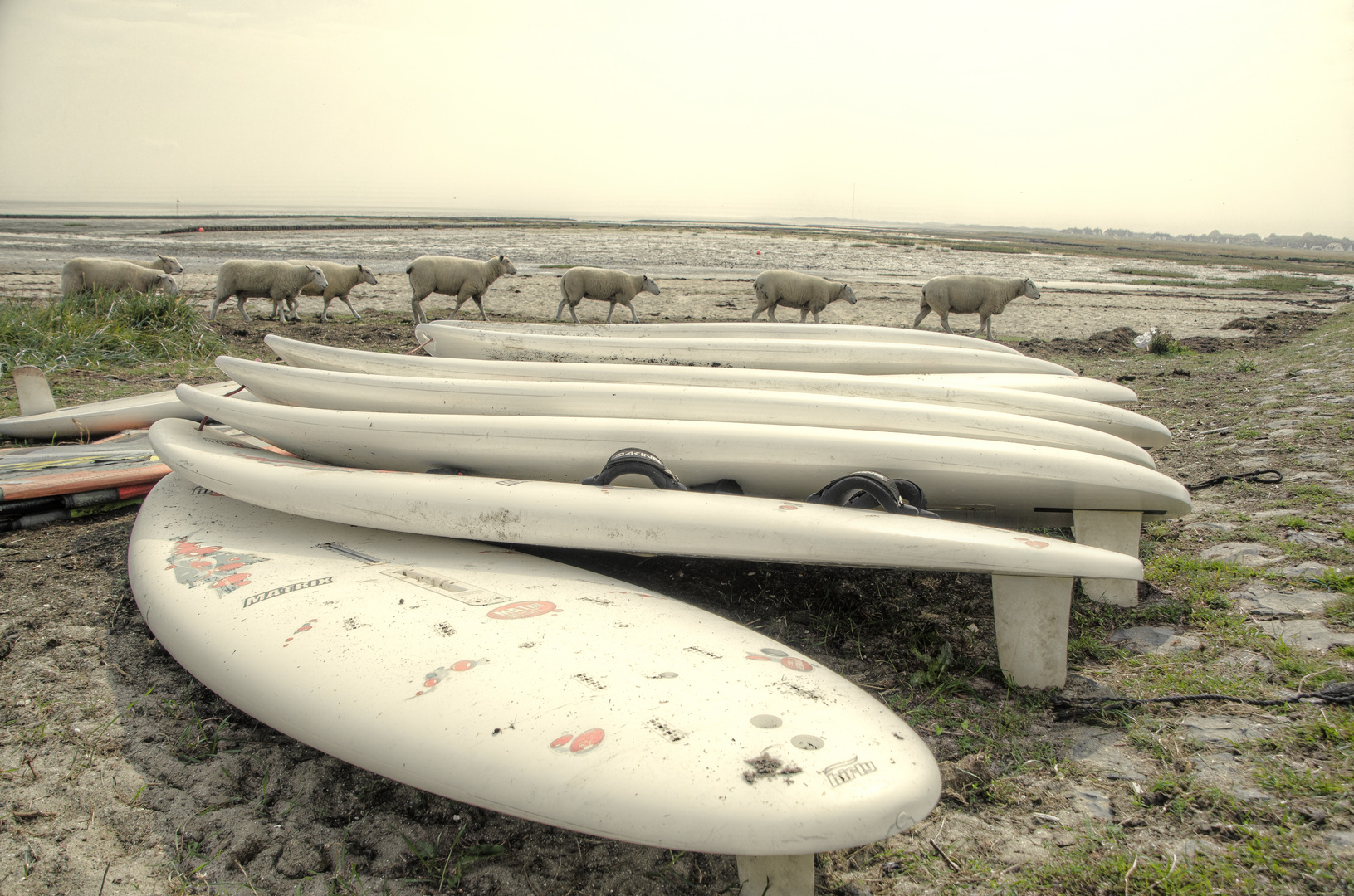Sheep-Cup on Sylt
