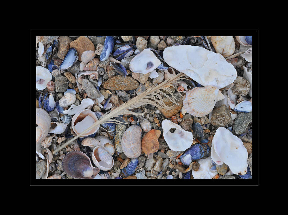 Shells and more #1