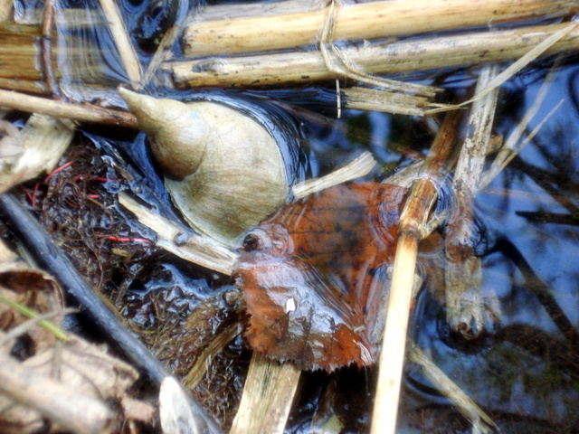shell&wood&water united