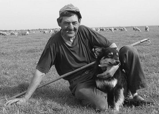 Shepherd 5/No.1