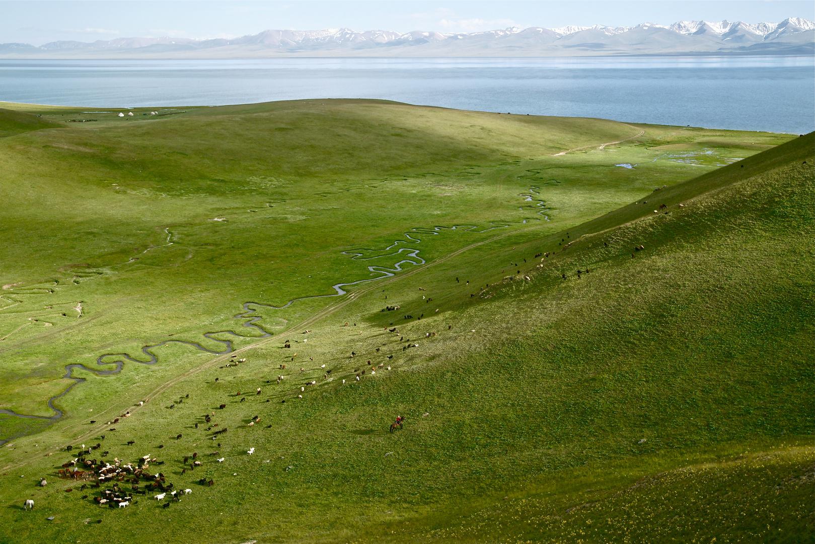 Shepherd's land