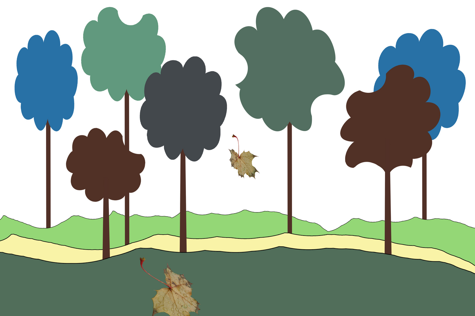 Sherwood Forest unplugged