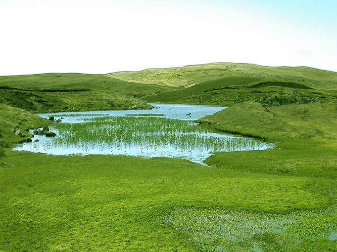 Shetland-Reise 2002 (Hochmoor)