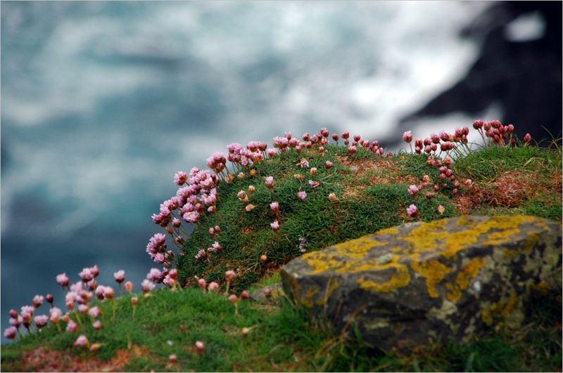 Shetland VI