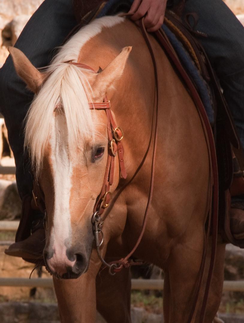 Shining Horse