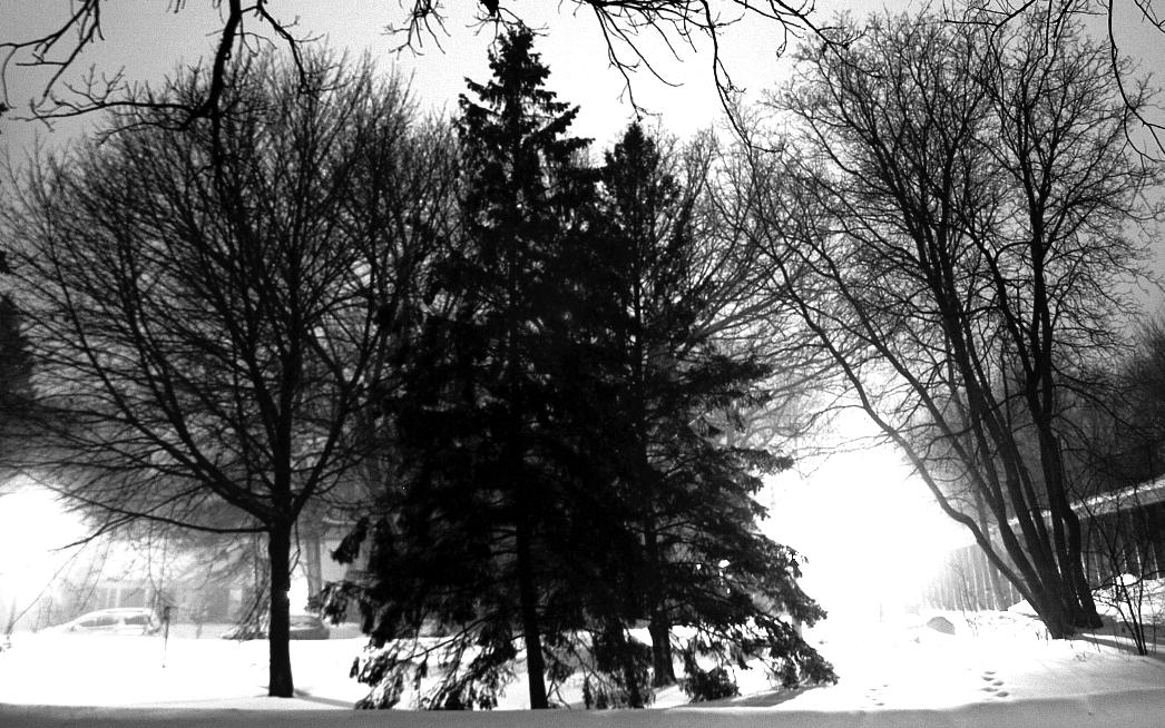 Shining snow, proud pine