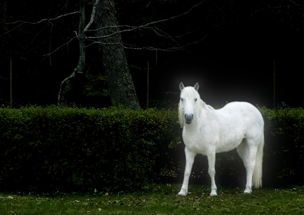 Shining White