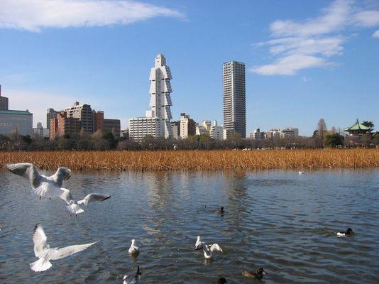 Shinobazu Pond im Ueno Park
