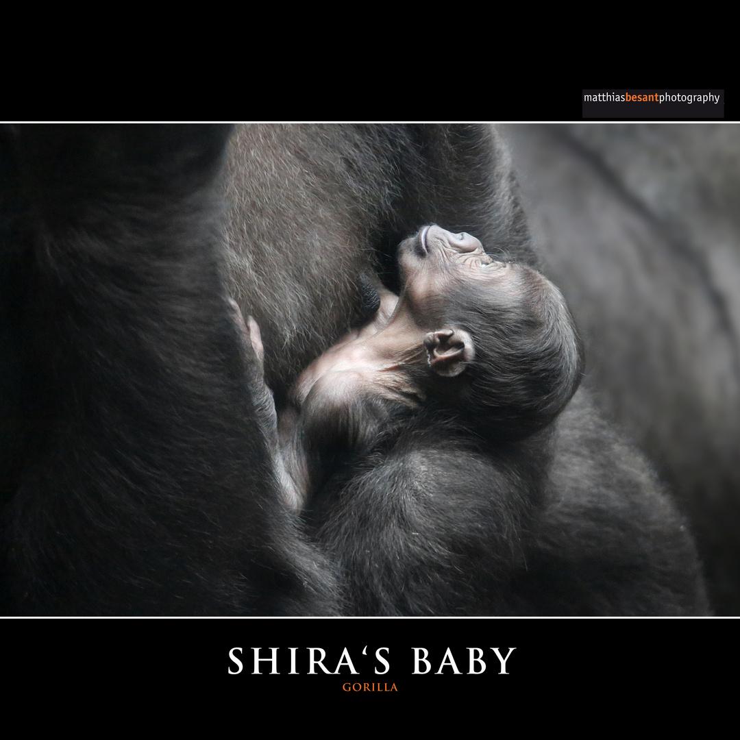 SHIRA'S BABY