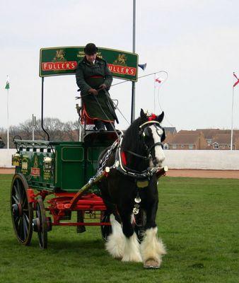 Shire Horse mit Kutsche