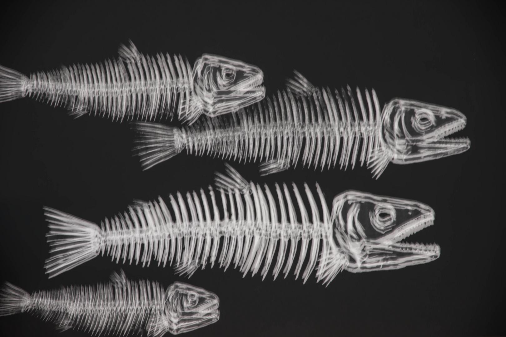 Shiverfish