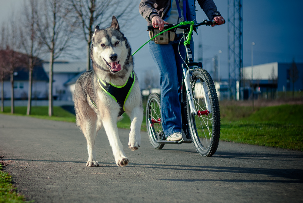 Shooting beim Dogscooting