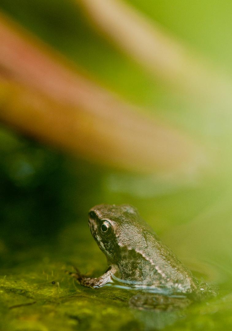 Shooting mit dem Frosch 2