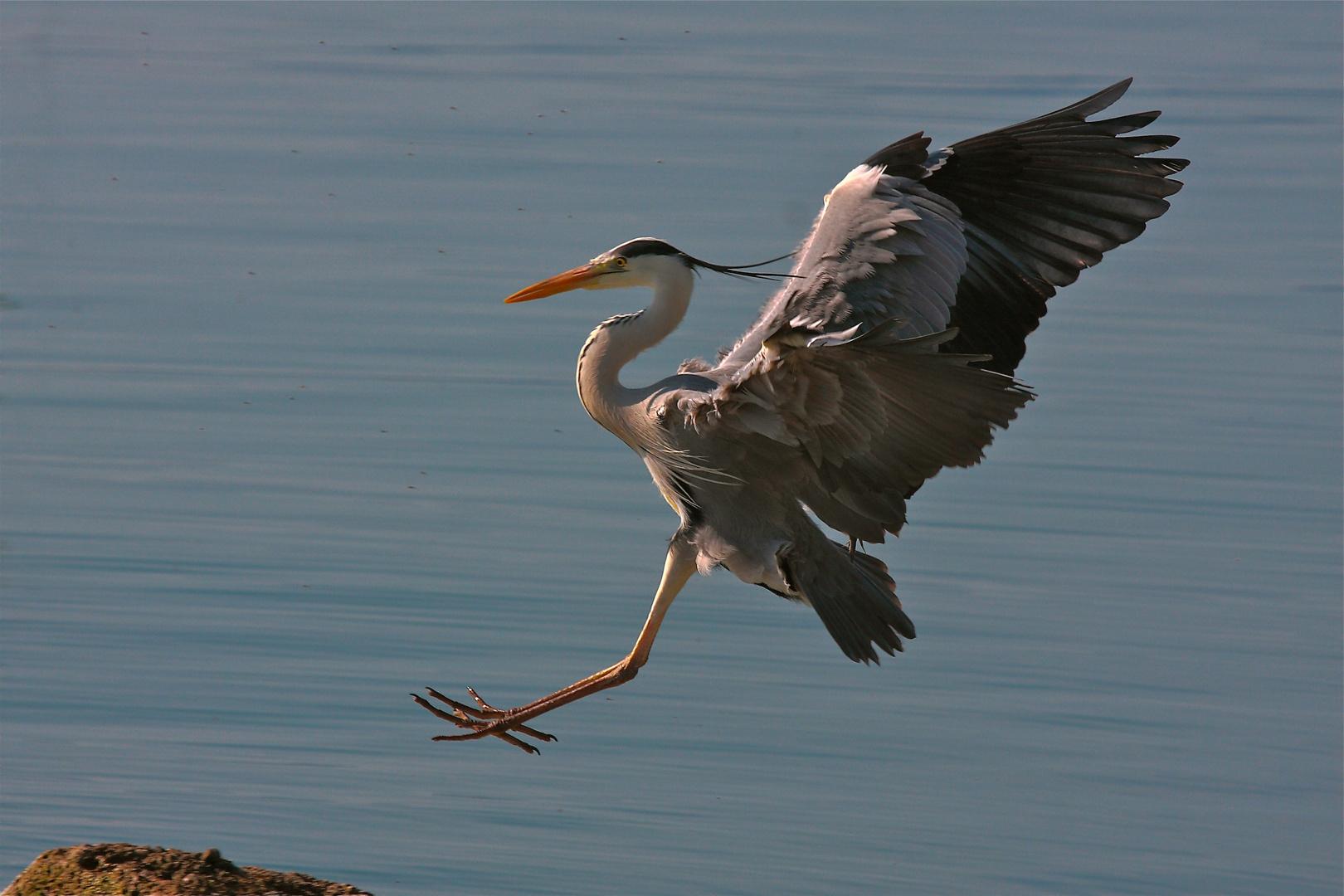 Short landing.
