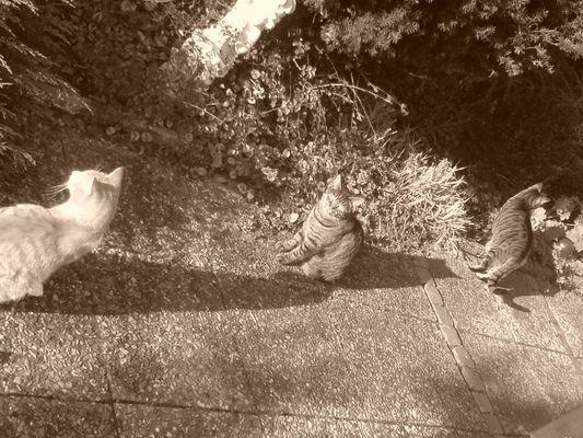 Shorty, Tiger, Fritzi