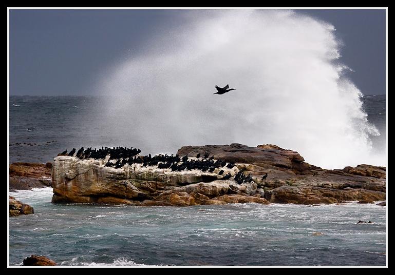 Shower for cormorants