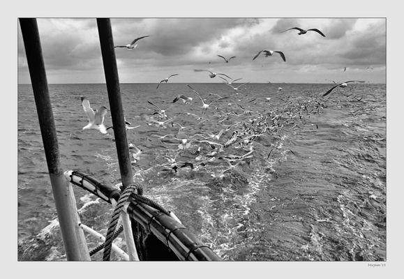 Shrimp fishing ..