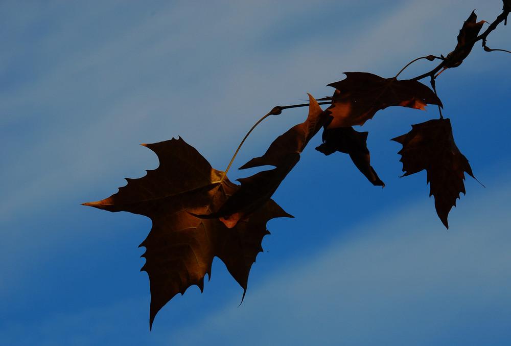 """""""Si sta come, d'autunno, sugli alberi, le foglie"""" G. Ungaretti"""