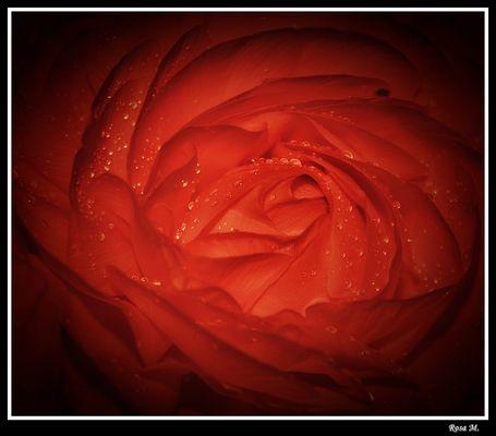 Si una flor llora...