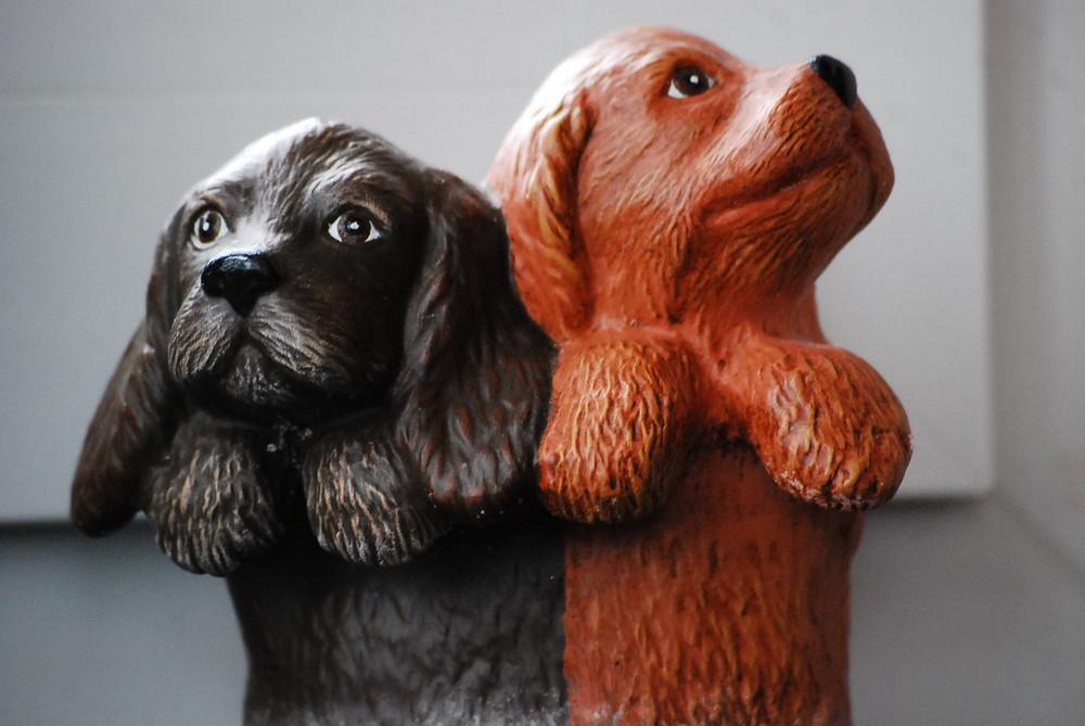 Siamesische Hunde?!