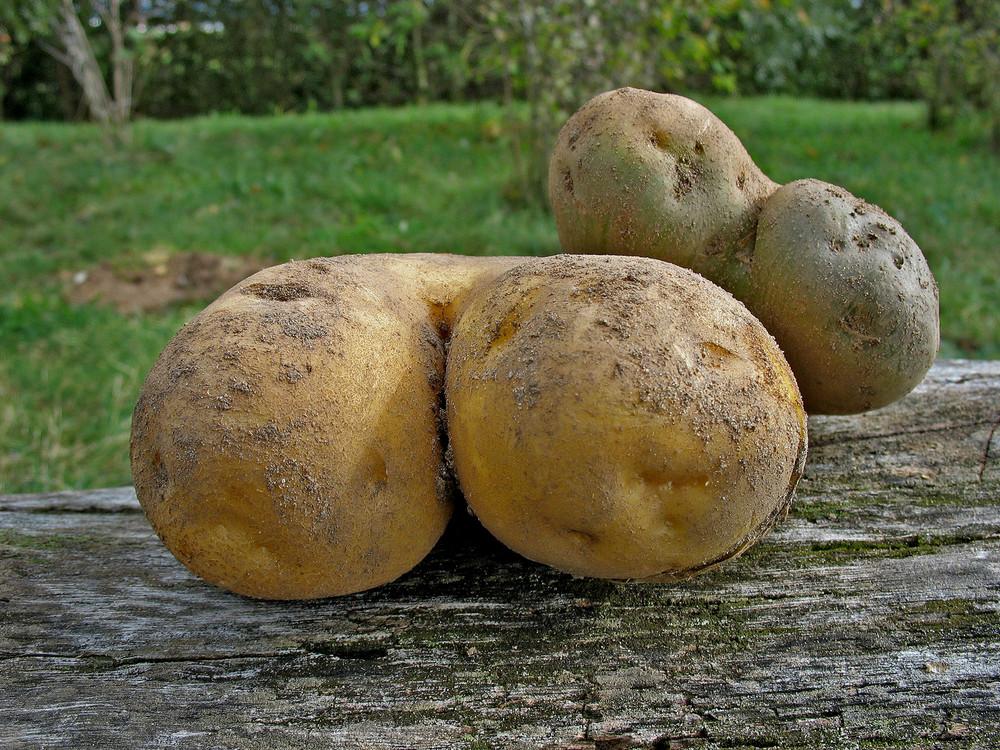 Siamesische Kartoffeln