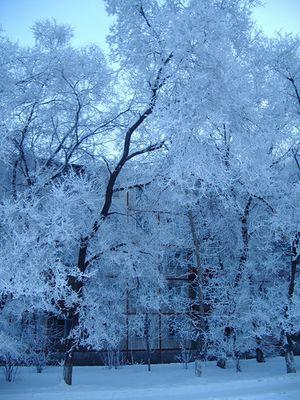 siberia in the morning