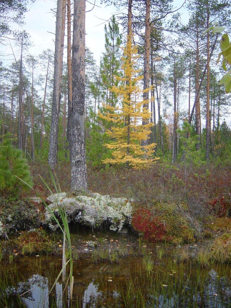 Sibirien im Herbst