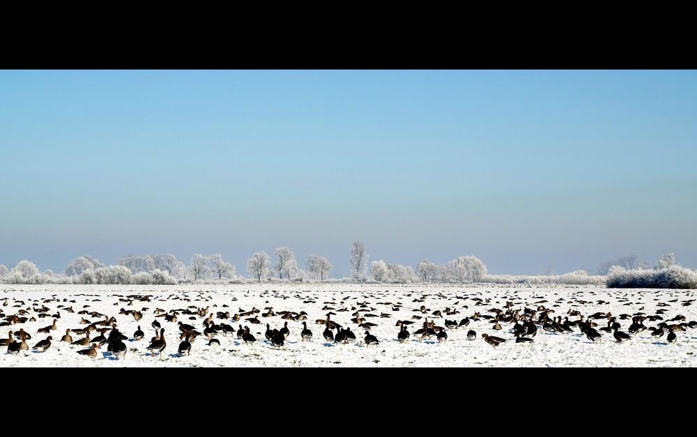 Sibirien zu Gast am Niederrhein