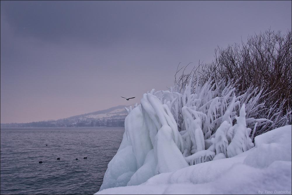 sibirische Kälte am Bodensee