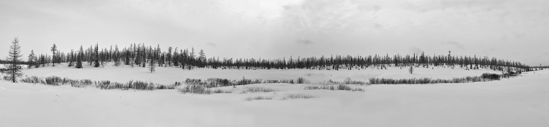 Sibirische Taiga