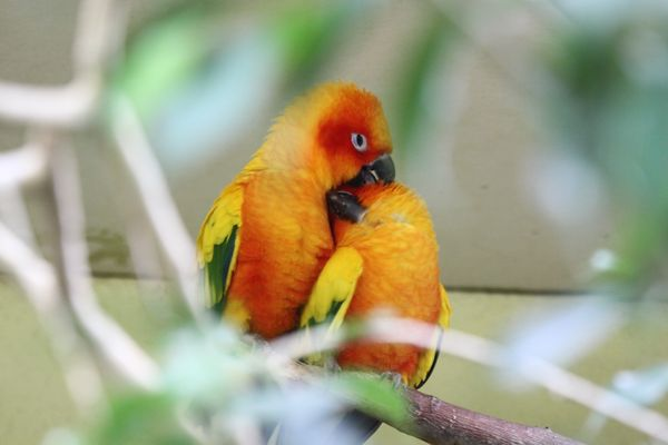sich liebende Vögel