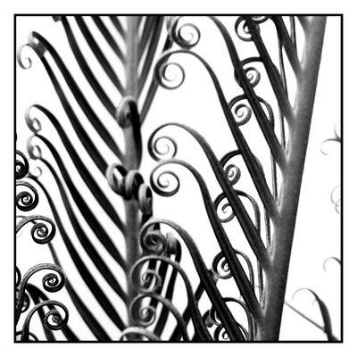 Sich öffnende Blätter in schwarz-weiss