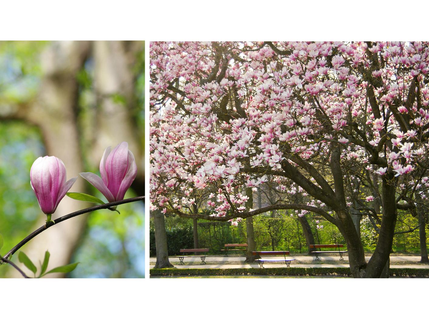 .....sich von Blüten berauschen lassen
