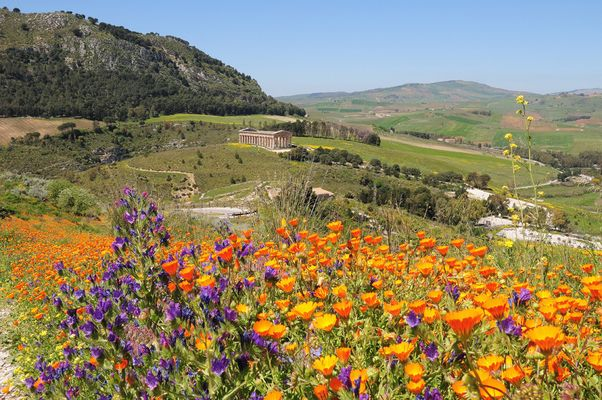 Sicile - Segestre Temple sous les fleurs - Avril 2013