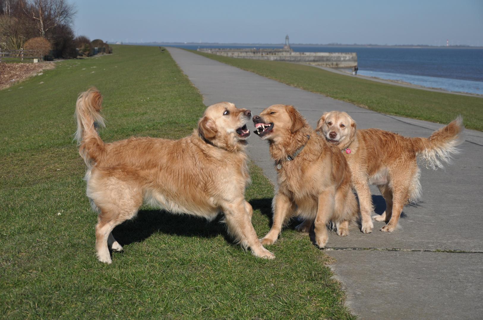 Sid, Sparky und Viola