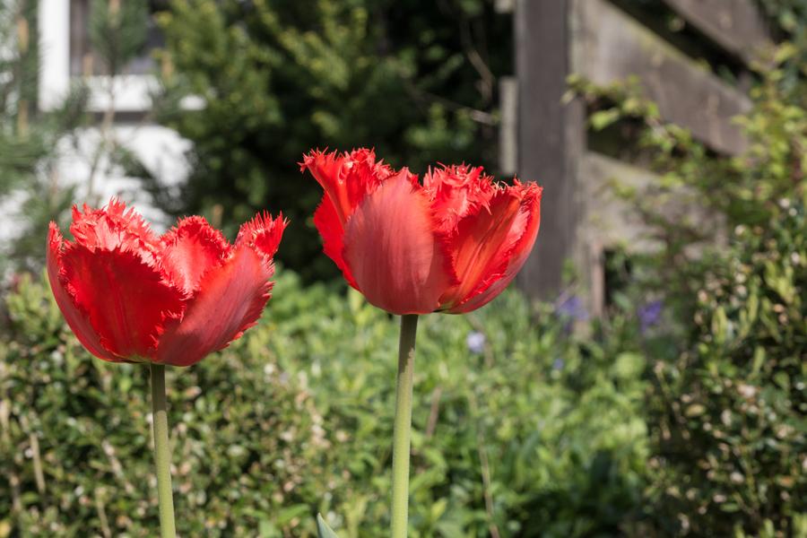 Sie blühten im April
