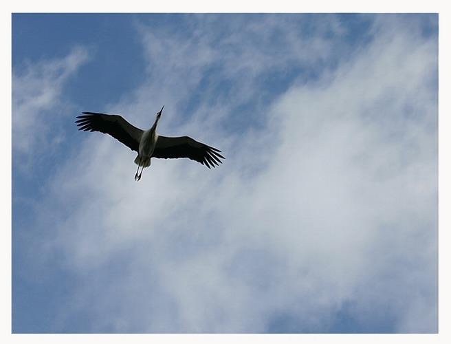 ...sie fliegen wieder....
