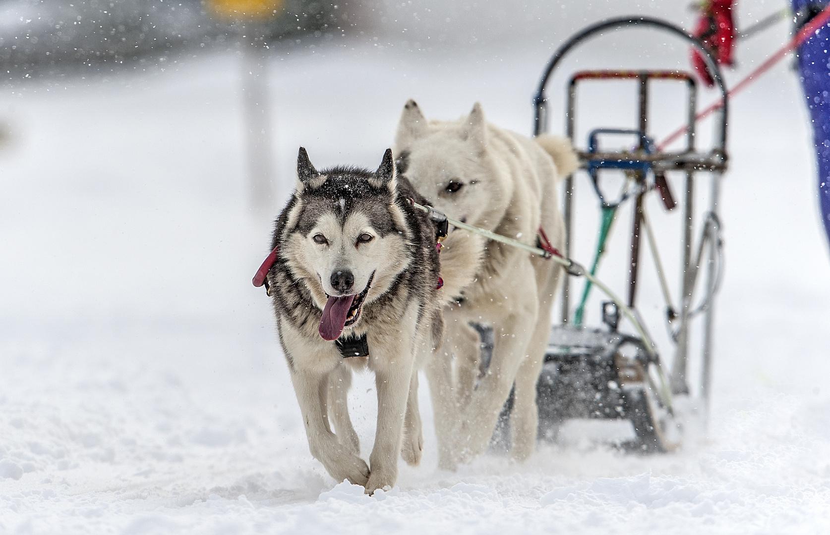 Sie lieben den Winter...