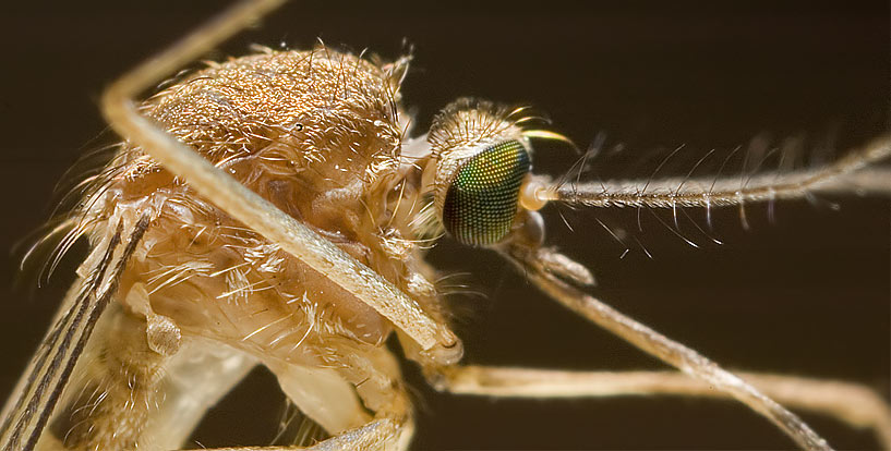 Sie nannten ihn Mücke.