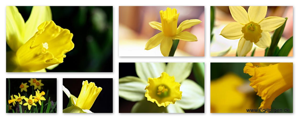 sieben mal gelb