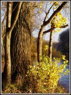 Siegmündung im Herbst - Goldenen Zeiten
