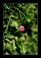 Sieh eine Welt in einem Körnchen Sand und einen Himmel in der wilden Blume