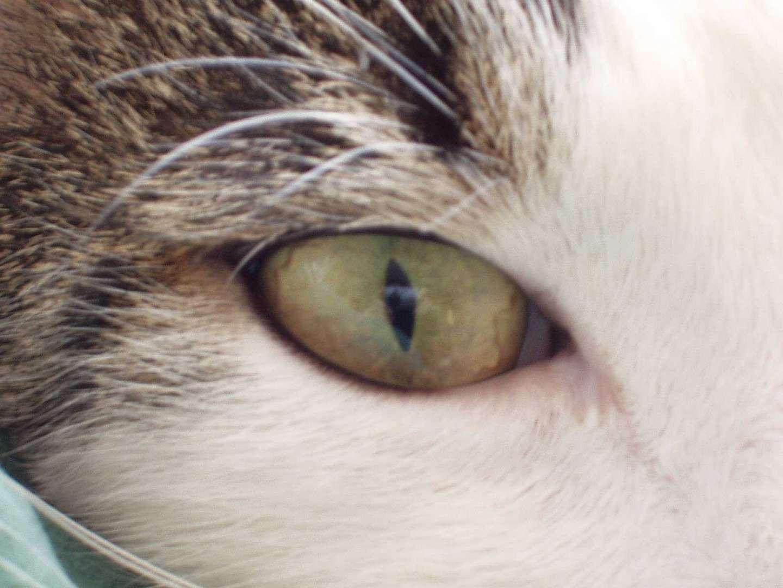 Sieh mir ins Auge Kleines