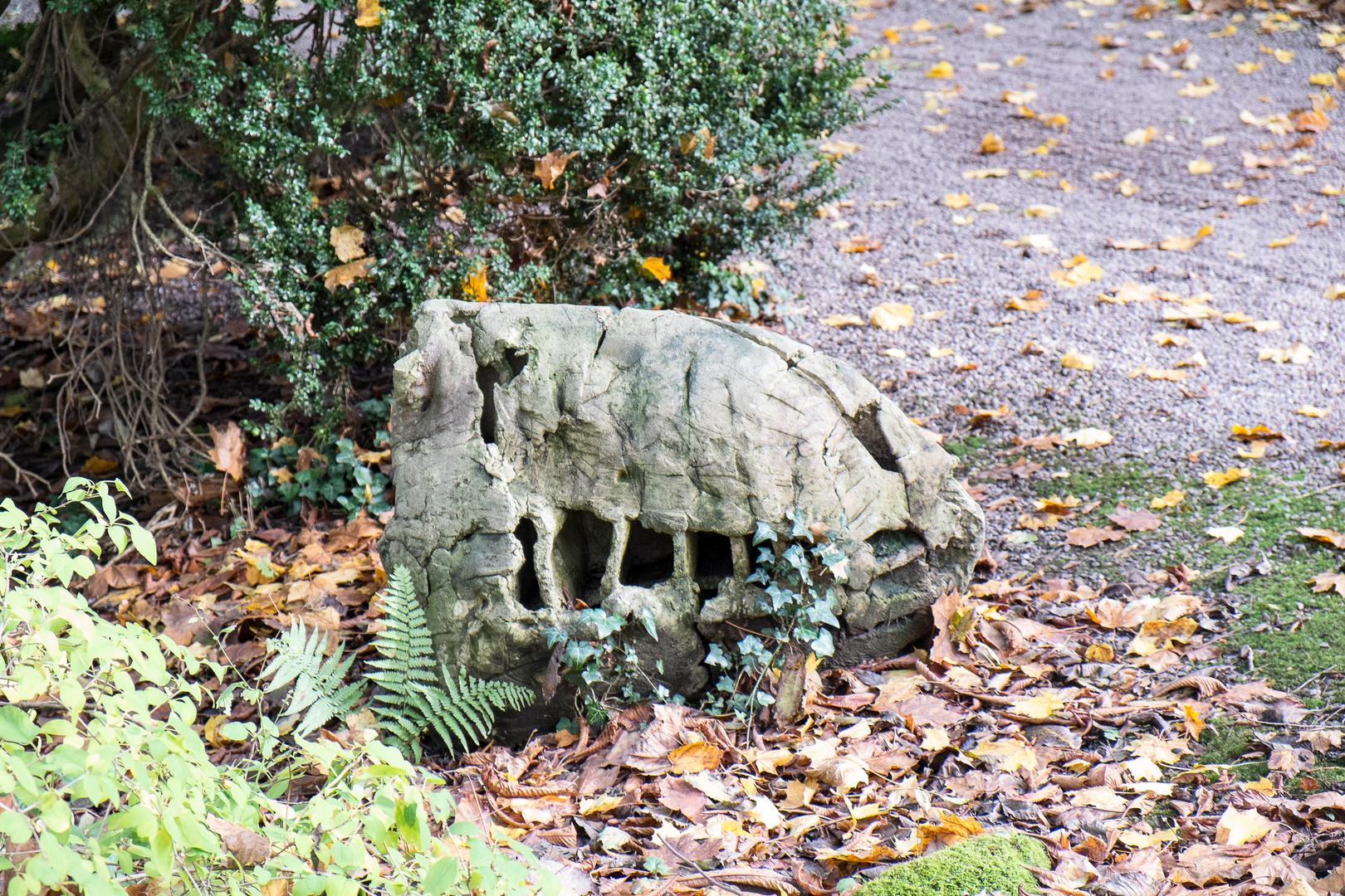 Sieht der Stein nicht aus wie der Kopf eines Dinos?