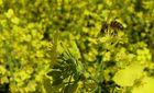 Sieht so der Bienenhimmel aus...